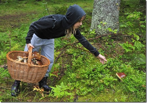 В Литву за грибами | IĮ «NET ARTIS»